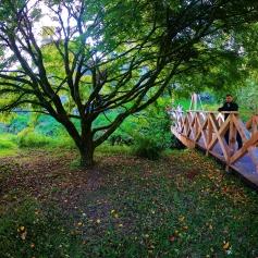 Blarney Castle Trees
